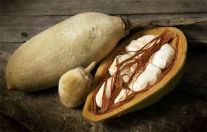 le fruit de baobab bio pain de singe