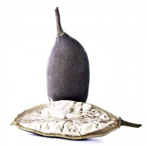 Baomix le fruit de baobab bio